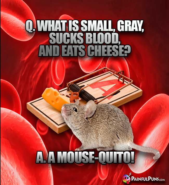 Q. What is small, gray, suck blood, and eats cheese? A. A Mouse-quito!