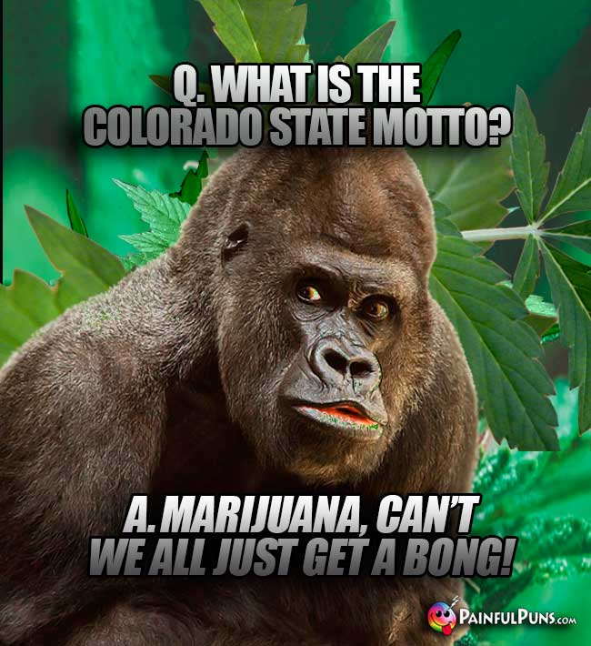 Q. What is the Colorado state motto? A. Marijuana, can't we all just get a bong!