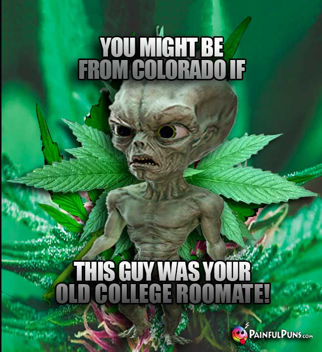 Alien in a weed field says: You might be from Colorado if this guy was your college roomate!
