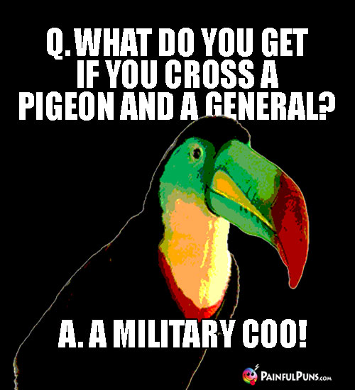 Q. What do you get if you cross a pigeon and a general? A. A Military Coo!