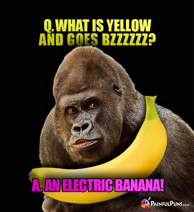 Gorilla asks: What is yellow and goes Bzzzzzz? A. An electric banana!