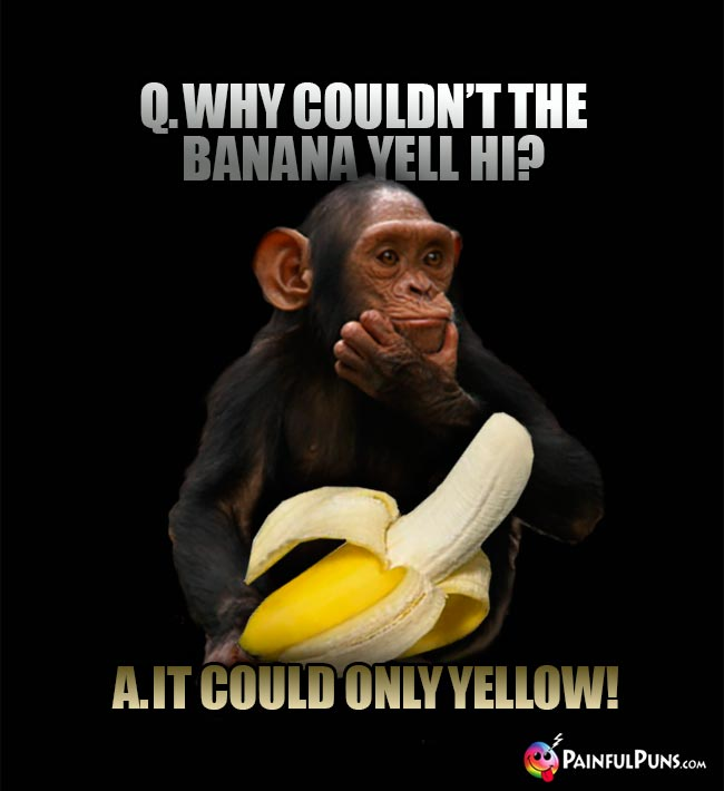 Chimp asks: Why couldn't the banan yell HI? A. It could only YELLOW!