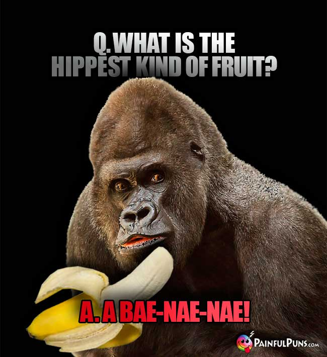 Gorilla asks: What is the hippest kind of fruit? A. A bae-nae-nae!