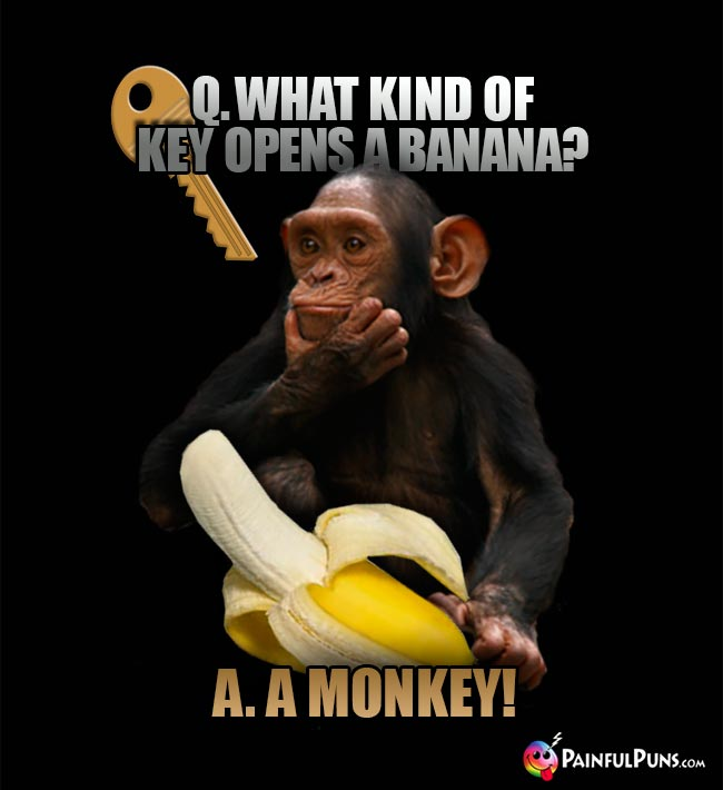 Chimp asks: What kind of key opens a banana? A. A monkey!