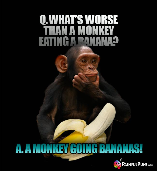 Q. What's worse than a monkey eating a banana? A. A monkey going bananas!