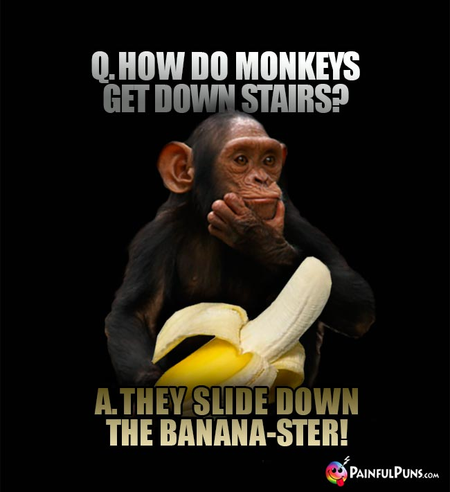 Q. How do monkeys et down stairs? A. They slidw down the banana-ster!