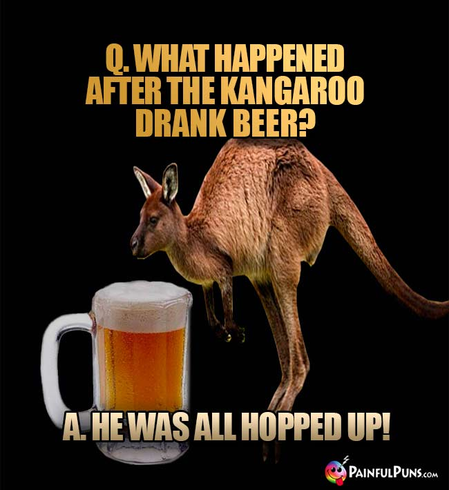 Kangaroo asks: What happened after the kangaroo drank beer? A He was all hopped up!