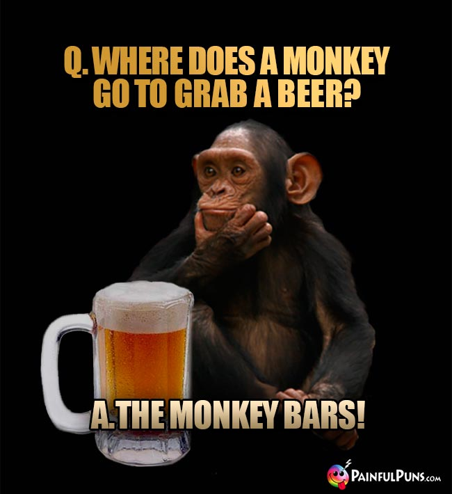 Chimp asks: Where does a monkey go to grab a beer? A. The monkey bars!