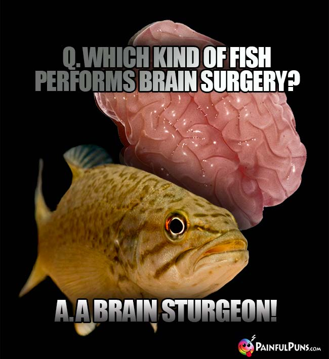 Q. Which kind of fish performs brain surgery? A. A brain sturgeon!
