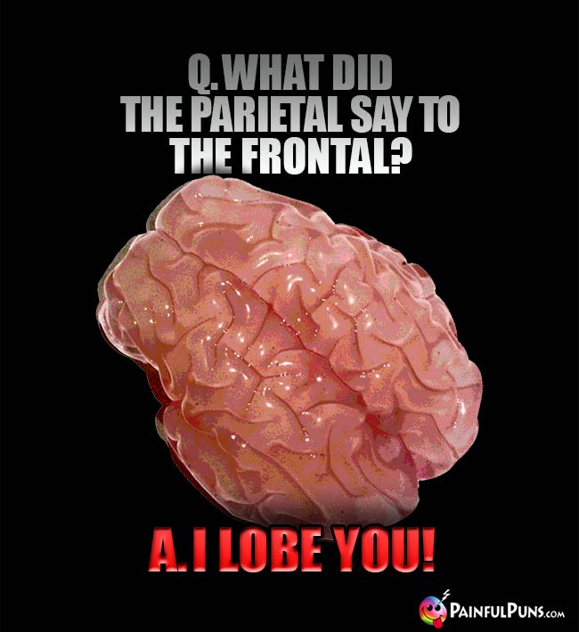 Q. What did the parietal say to the frontal? A. I lobe you!