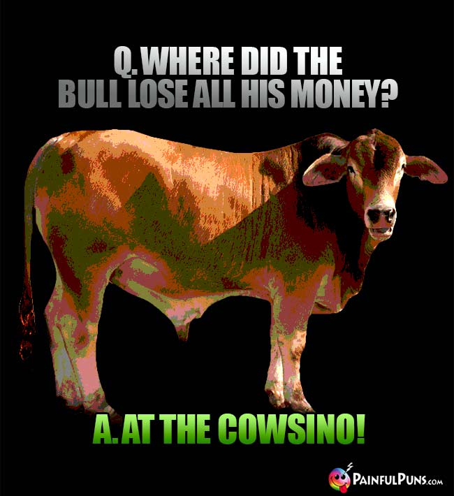 Q. Where did the bull lose all his money? A. At teh cowsino!