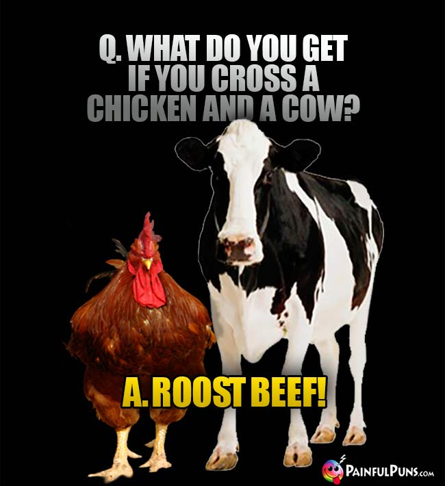 Q. What do you get if you cross a chicken and a cow? A. Roost Beef!