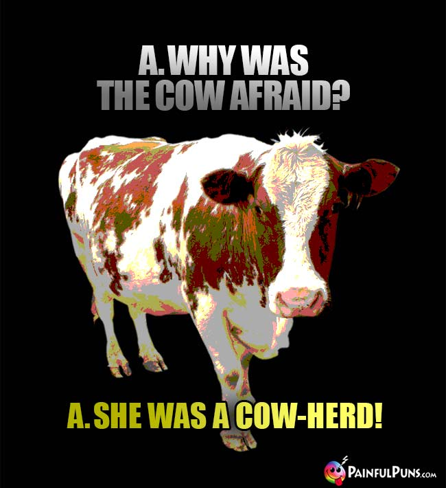 Q. Why was the cow afraid? A. She was a cow-herd!