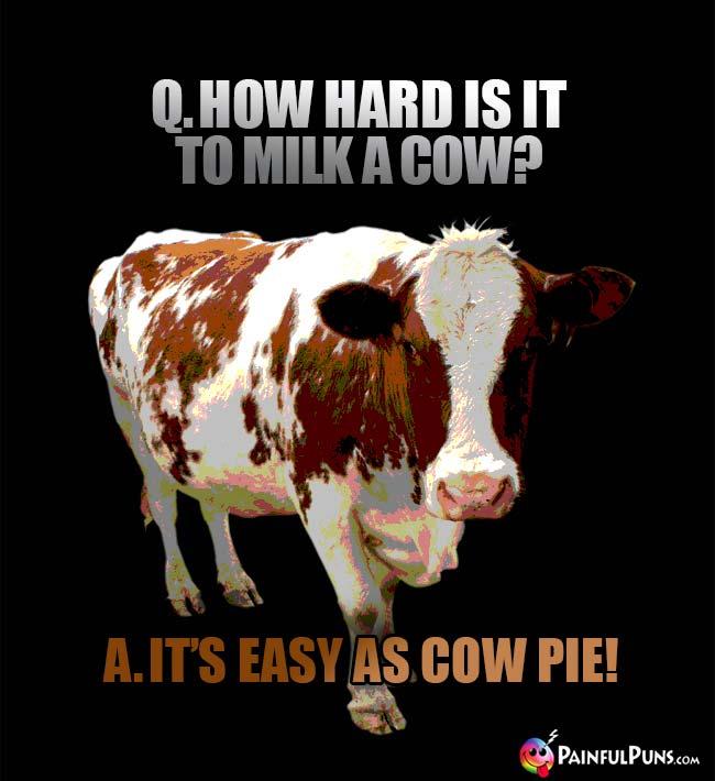 Dairy Cow Jokes, Bull Humor, Moo-valous Cow Puns 5 ...