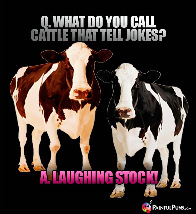 Q. What do you call cattle that tell jokes? A. Laughing stock!