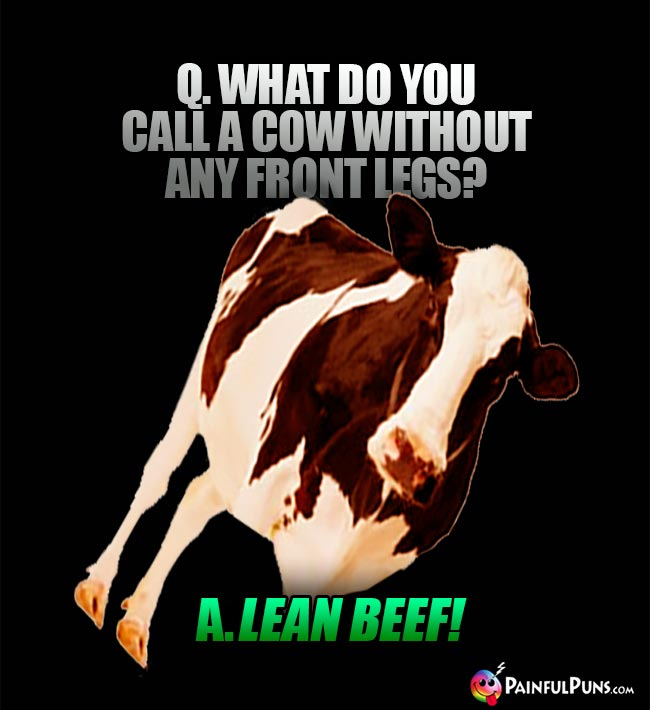 Q. What do you call a cow without any front legs? A. Lean beef!