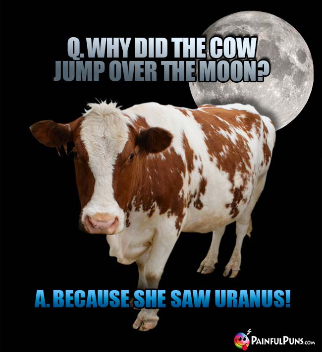 Q. Why did the cow jump over the moon? A. Because she saw Uranus!