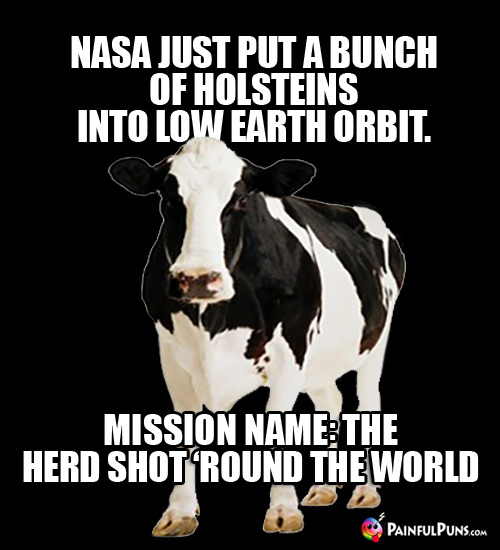 NASA just put a bunch of Holsteins into low earth orbit. Missioin name: The Herd Shot 'Round the World