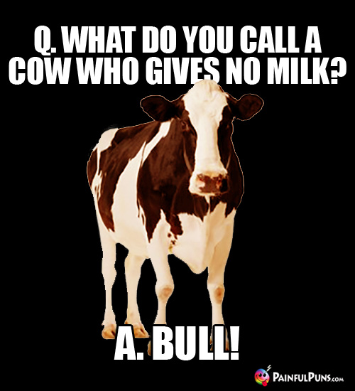 Q. What do you call a cow who gives no milk? A. A Bull