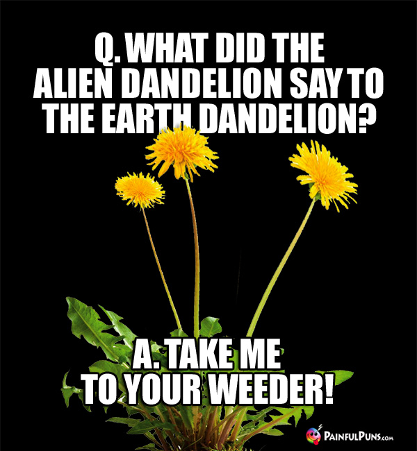 Q. What did the alien dandelion say to the earth dandelion? A. Take me to your weeder!