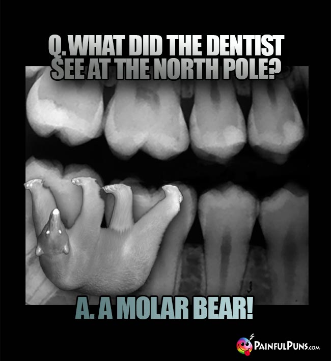Q. What did the dentist see at the North Pole? A. A molar bear!