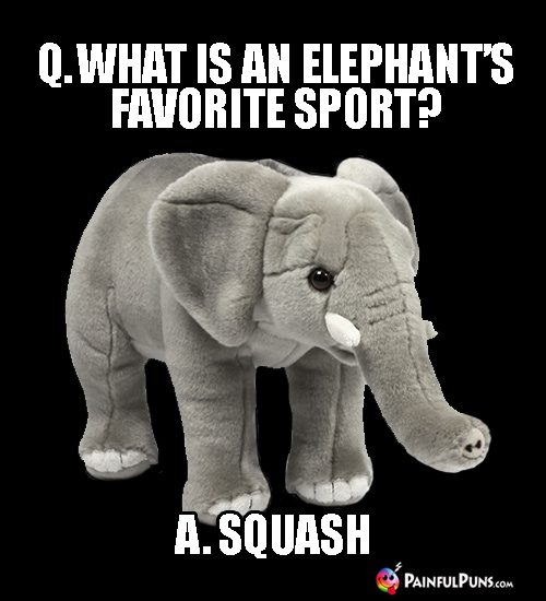 Q. What is an elephant's favorite sport? A. Squash.
