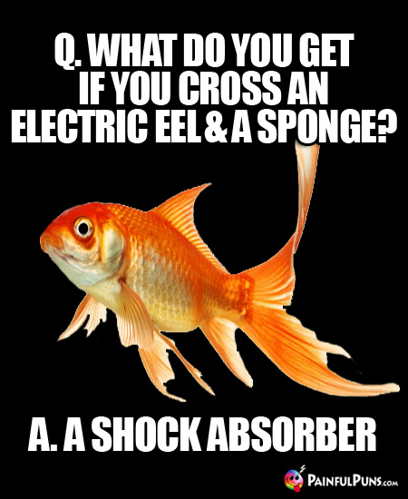 Q. What do you get if you cross an electric eel and a sponge? A. A shock absorber.