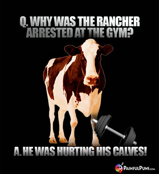 Q. Why was teh rancher arrested at the gym? A. He was hurting his calves!