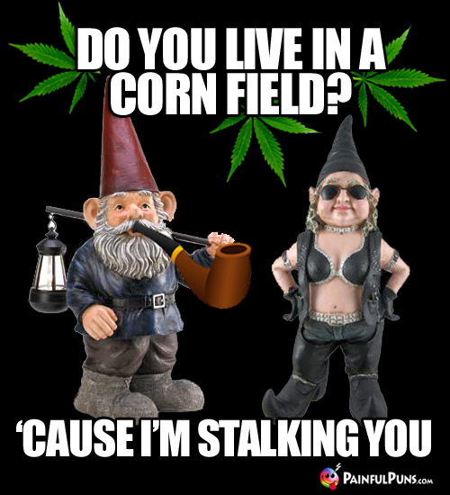 Gnomes with Pot Leaves: Do You Live in a Corn Field? 'Cause I'm Stalking You