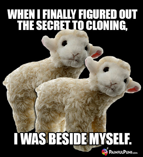 Sheep Joke: When I finally figured out the secret to cloning, I was beside myself.