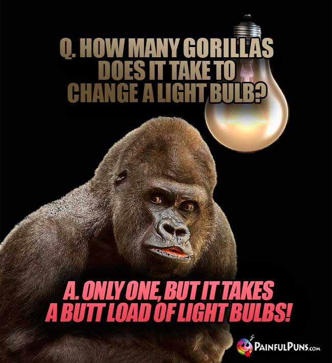 Q. How many gorillas does it take to change a light bulb? A. Only one, but it takes a butt load of ight bulbs!