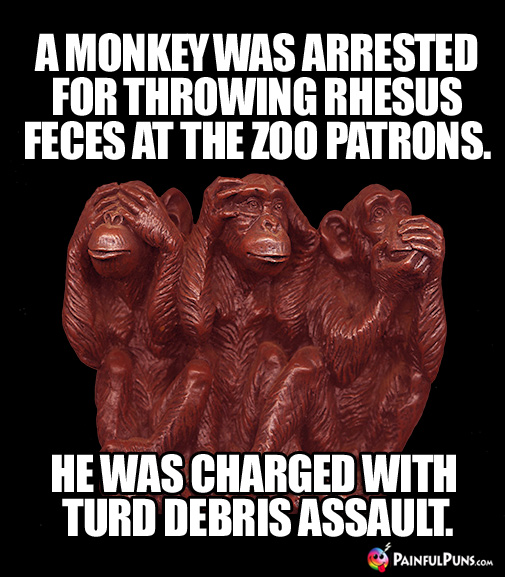 A Monkey Was Arrested for Throwing Rhesus Feces at the Patrons. He Was Charged with Turd Debris Assault.