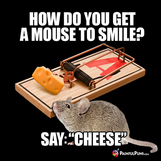 "How Do You Get a Mouse to Smile? Say: ""Cheese"""