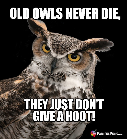Wild Animal Pun: Old owls never die, they just don't give a hoot!