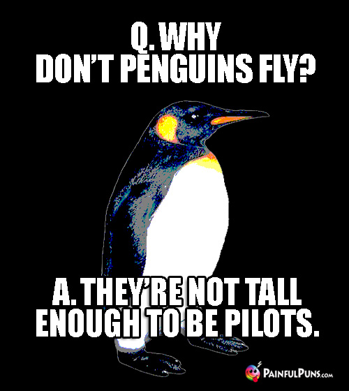 Q. Why don't penguins fly? A. They're not tall enough to be pilots.