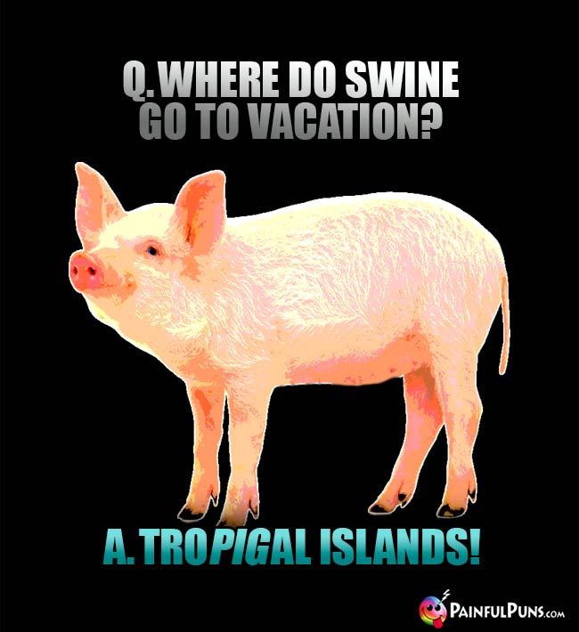 Q. Where do swine go to vacation? A. Tro-pig-cal islands!