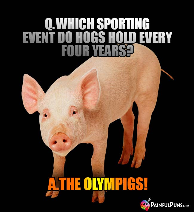 Q. Which sporting event do hogs hold every four years? A. The Olympigs!