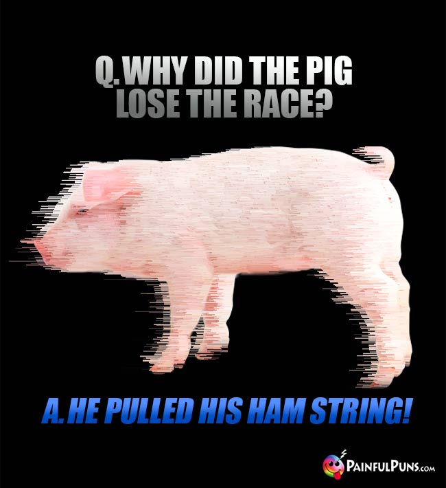Q. Why did the pig lose the race? A. He pulled his ham string!