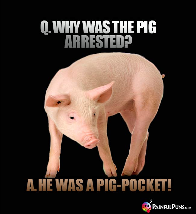 Q. why was the pig arrested? A. He was a pig-pocket!