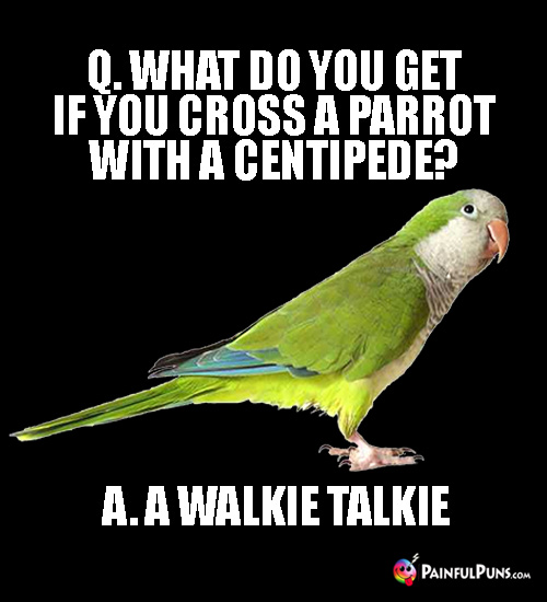 Q. What do you get if you cross a parrot with a centipede? A. A Walkie Talkie