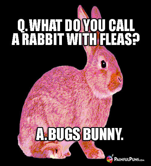 Q. What do you call a rabbit with fleas? A. Bugs Bunny