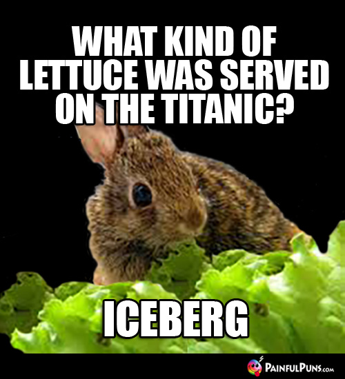 What kind of lettuce was served on the Titanic? Iceberg