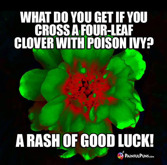 What do you get if you cross a four-leaf clover with poison ivy? A Rash of Good Luck