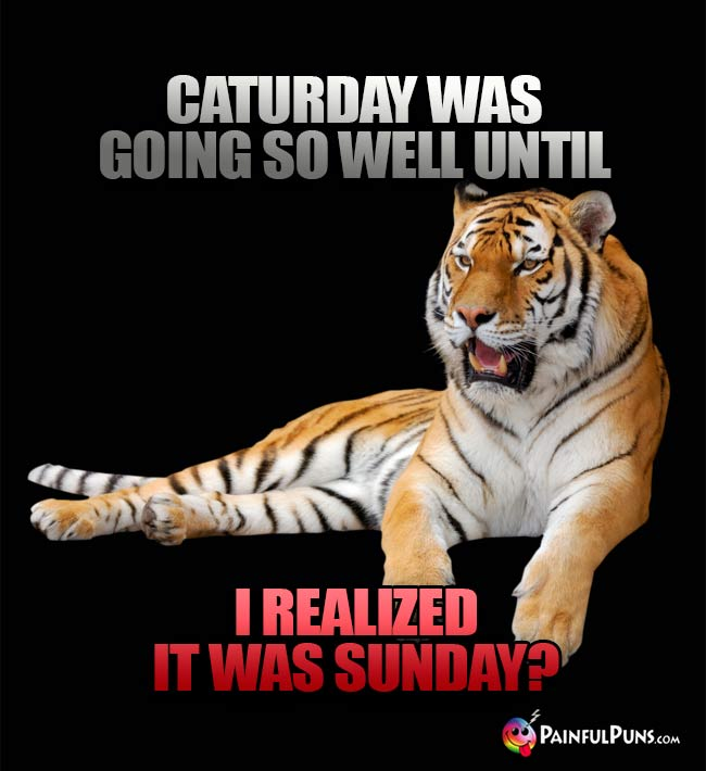 Tiger Says: Caturday was going so well until I realized it was Sunday?