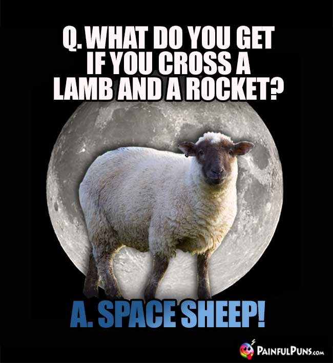 Q. What do you get if you cross a lamb and a rocket? A. Space Sheep!