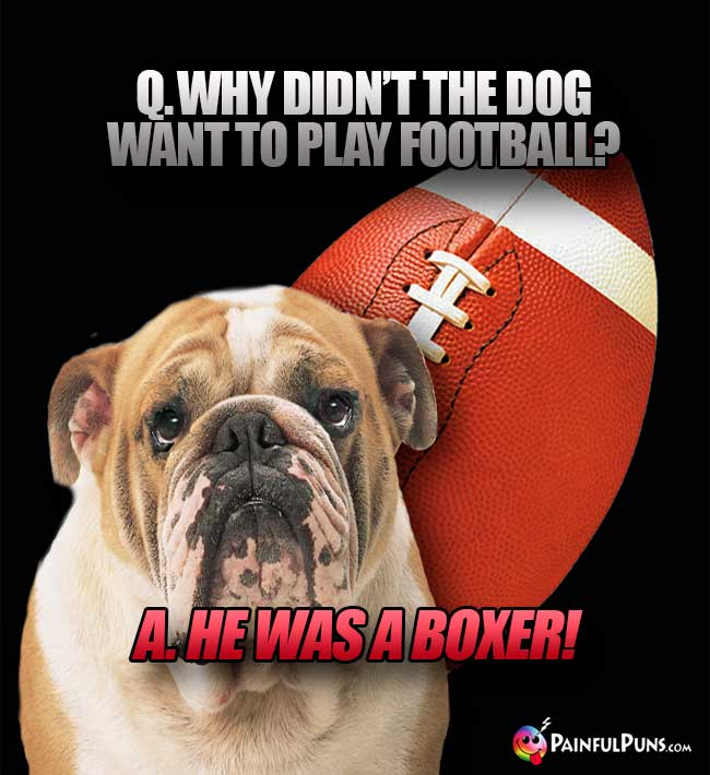 Q. Why didn't the dog want to play football? A. He was a Boxer!