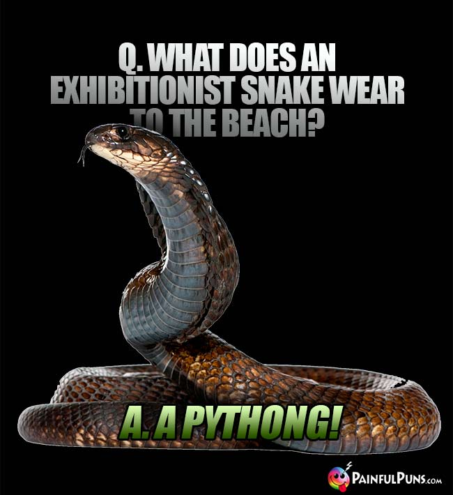 Q. What does an exhibitionist snake wear to the beach? A. A Pything!