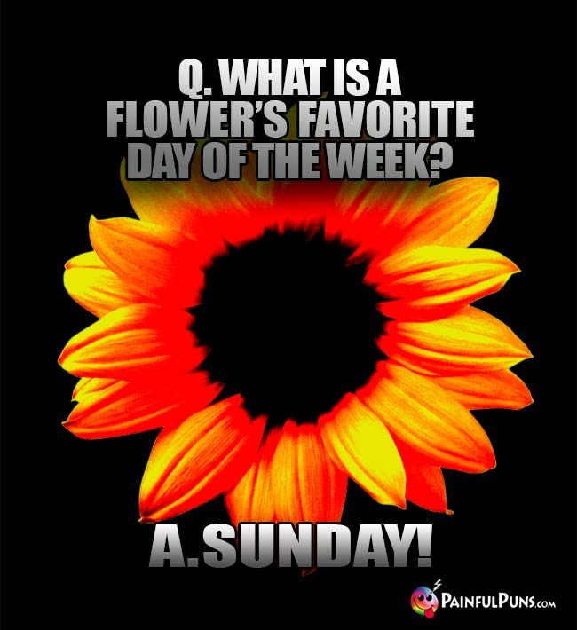 Q. What is a flower's favorite day of the week? A. Sunday!