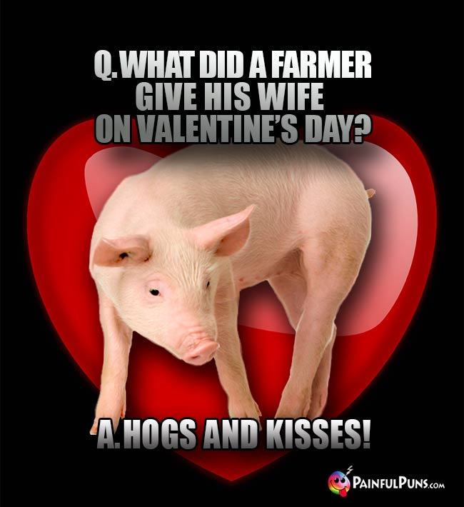 Q. What did a farmer give his wife on Valentine's Day? A. Hogs and kisses!