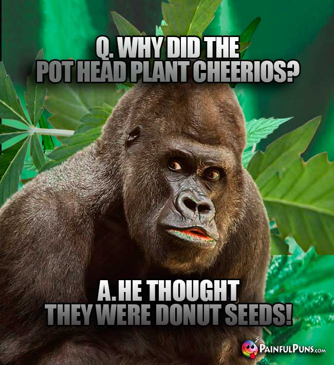 Q. Why did the pot head plant Cheerios? A. He thought they were donut seeds!